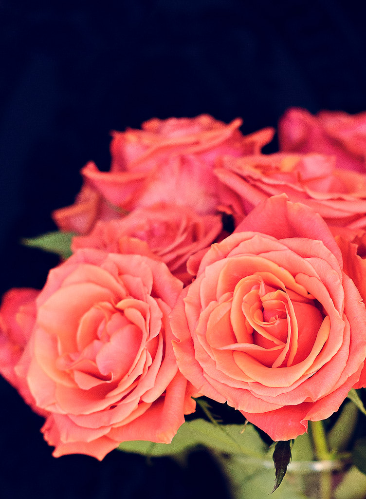 Photograph Roses by Lola Elise on 500px