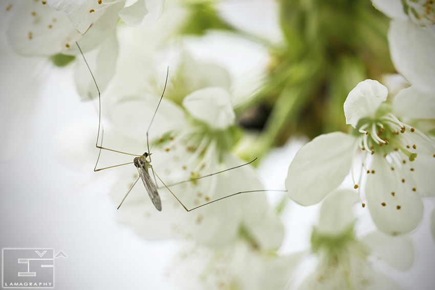 Photograph The Mosquito  by Eva_LaMagra on 500px