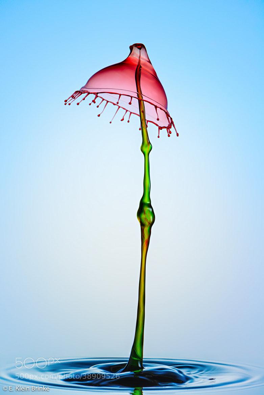 Photograph Flower by Erik Klein Brinke on 500px