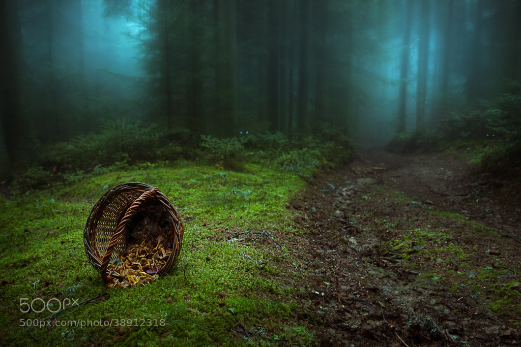 Photograph Where is Little Red !? by Bastien HAJDUK on 500px