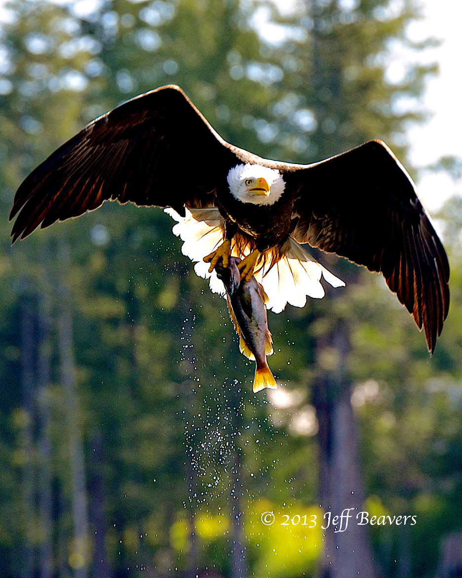 Photograph Great Catch! by Jeff Beavers on 500px