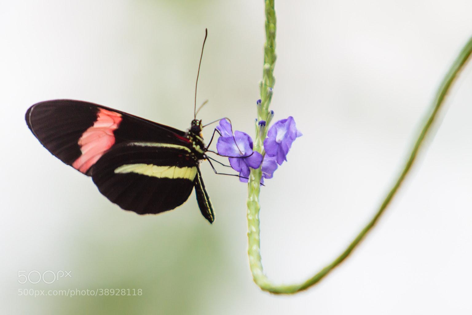 Photograph Butterfly by matthandi on 500px