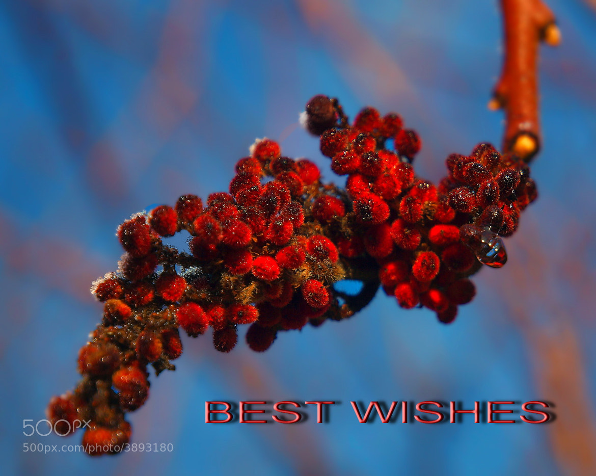 Photograph BEST WISHES   :) by Mirna Vidić on 500px