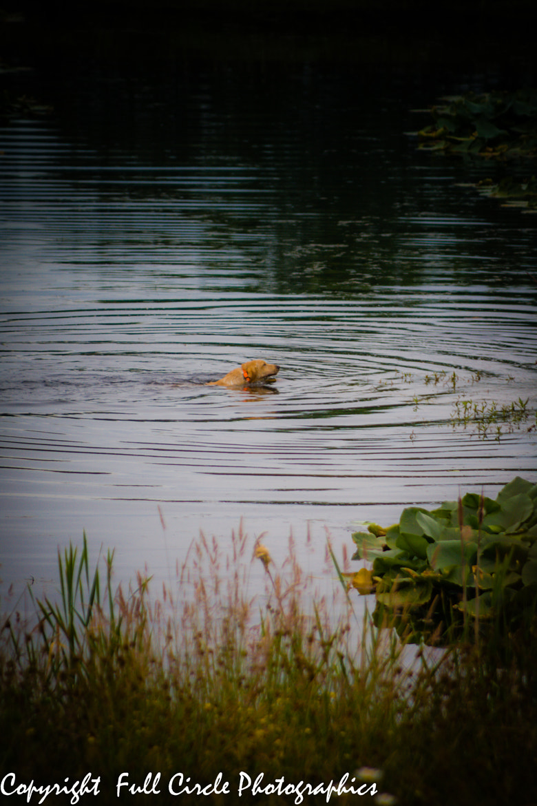 Photograph Water Dog X by Pandyce McCluer on 500px