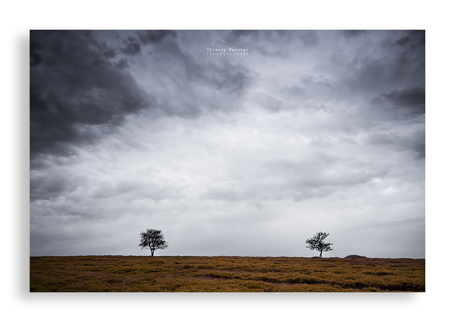 Photograph Trees by Thierry Perrier on 500px