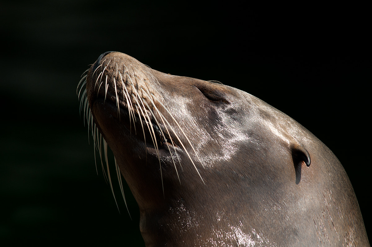Photograph Sea Lion likes Sunbathing by Rob Janné on 500px