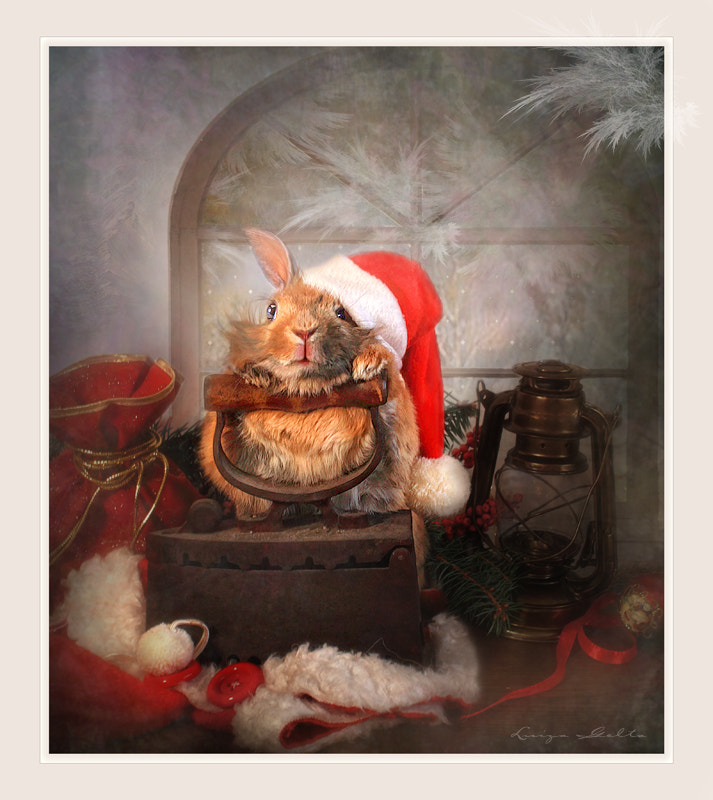 Photograph Preparation for Christmas by Luiza  Gelts -            Луиза  Гельтс on 500px
