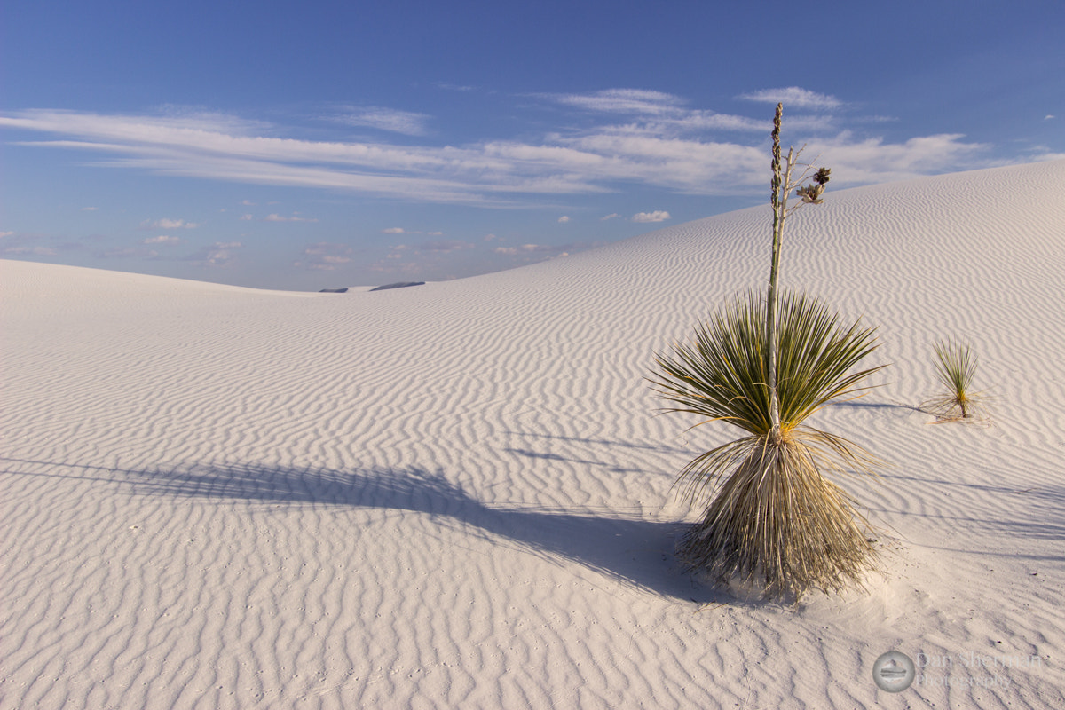 Photograph The New Mexican Beach by Dan Sherman on 500px