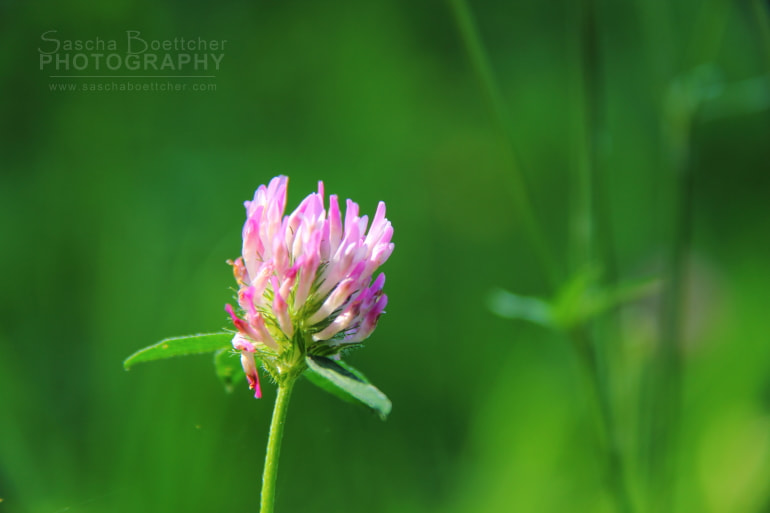 Photograph Somewhere in the meadow by Sascha Böttcher on 500px