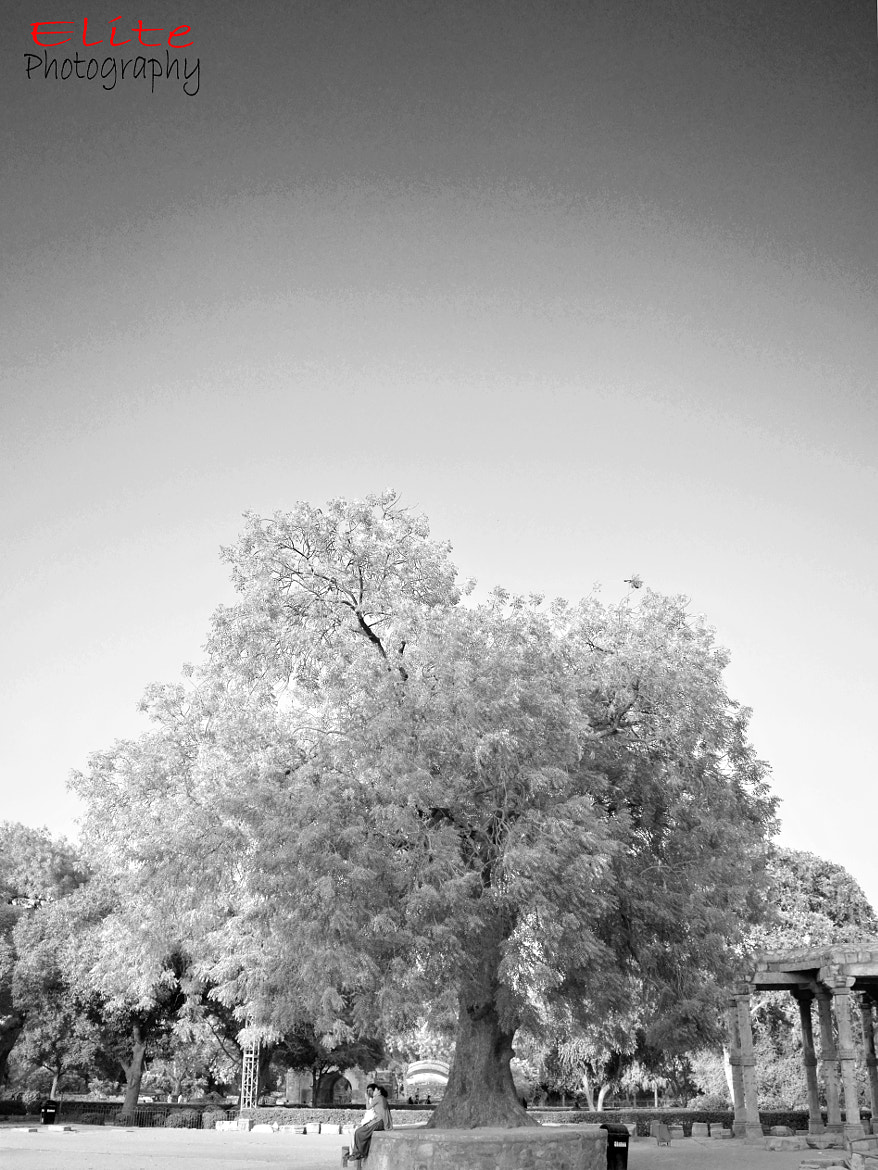 Photograph B&W tree by Mahommed kashif on 500px