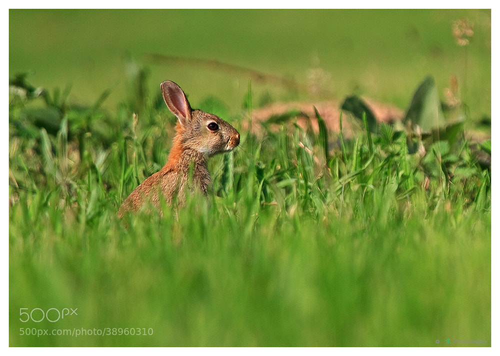 Photograph In the grass.... by Tobi K on 500px