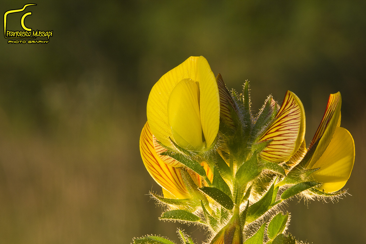 Photograph Yellow by Francesco Mussapi on 500px