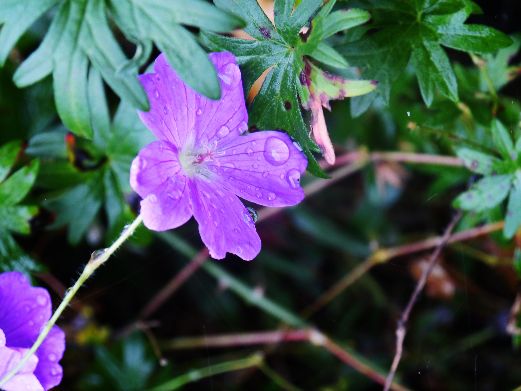 Photograph flower in the rain... by Veronika Herbst on 500px