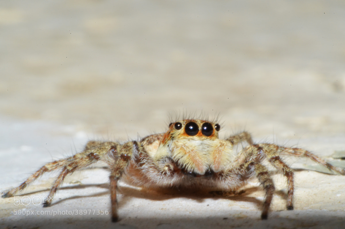 Photograph The Spider  by Walid Leo on 500px
