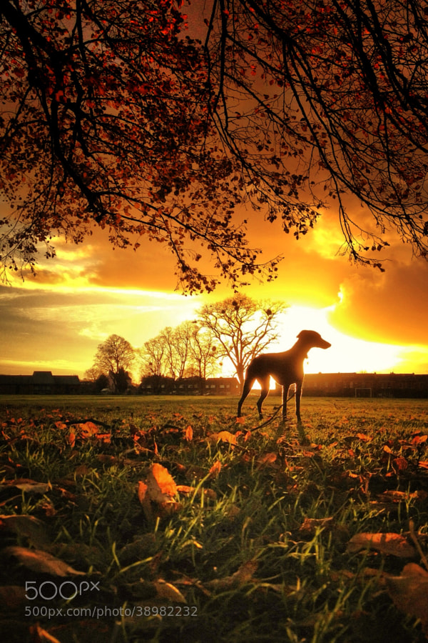 Photograph Fall dog by Duncan Powell on 500px