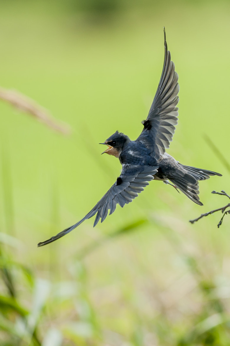 Photograph swallow by Riccardo Trevisani on 500px