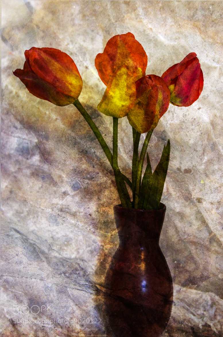Photograph Tulip Art by Mia Lisa Anderson on 500px
