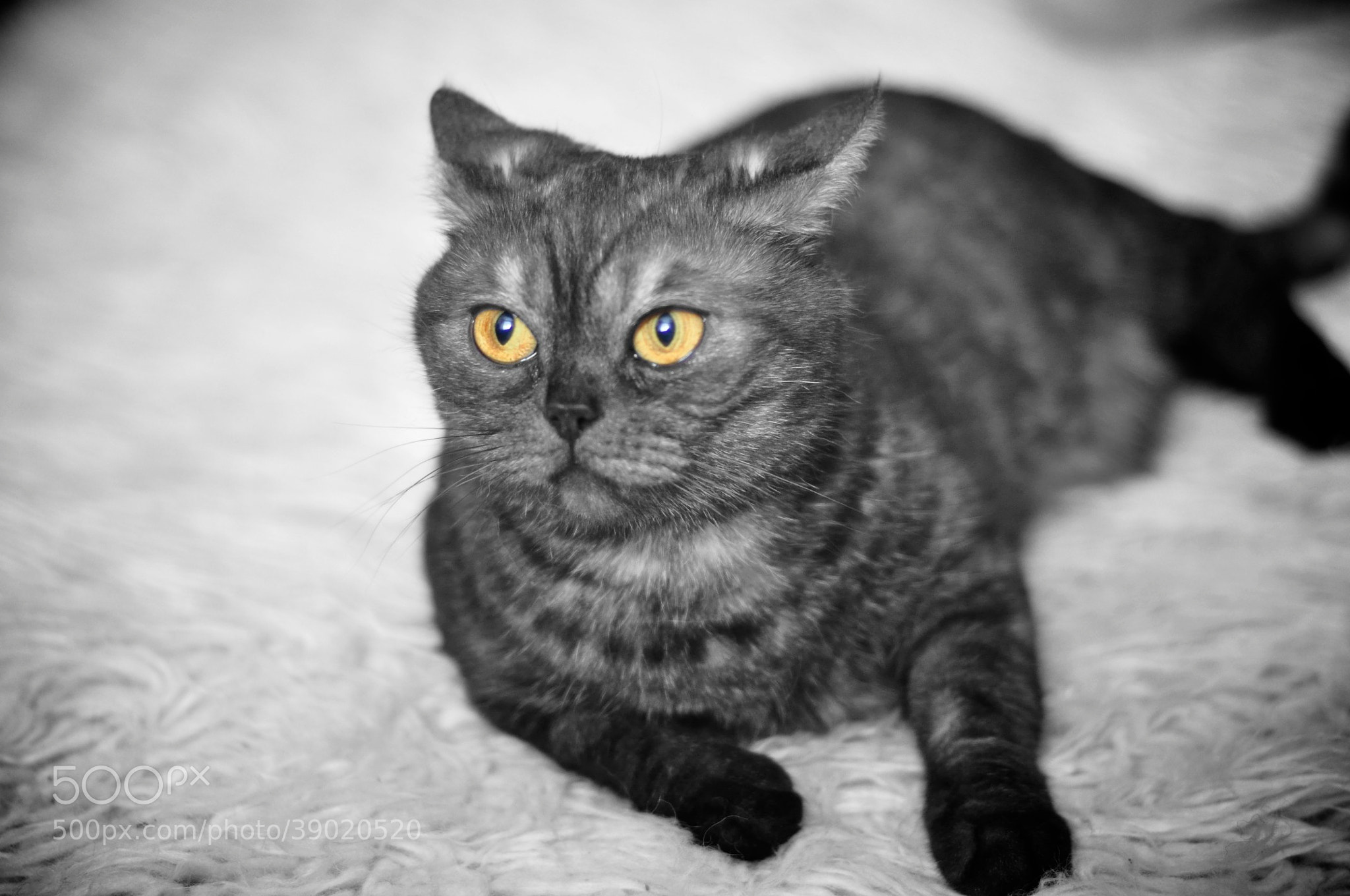 Photograph Kleopatra by MaxPro  on 500px