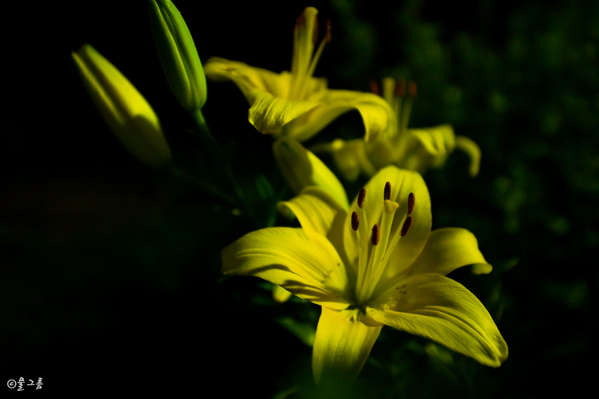 Photograph Lilium concolor Salisb by DONGWOOK KIM on 500px