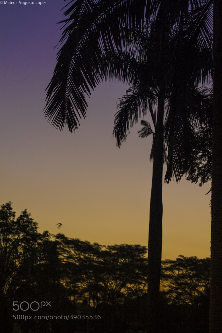 Photograph Nature at Dusk by Mateus Lopes on 500px