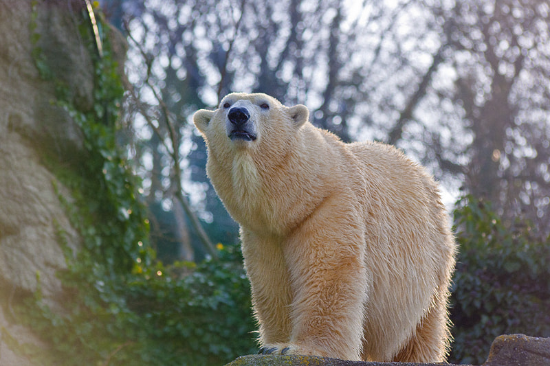 Photograph The Bear by Mohaned Elahwal on 500px
