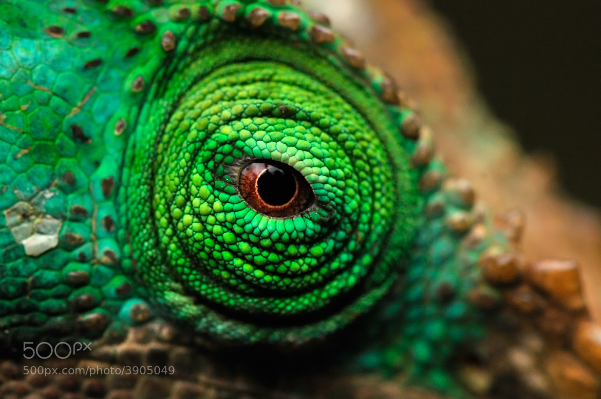 Photograph Eye by Gergely Lantai-Csont on 500px