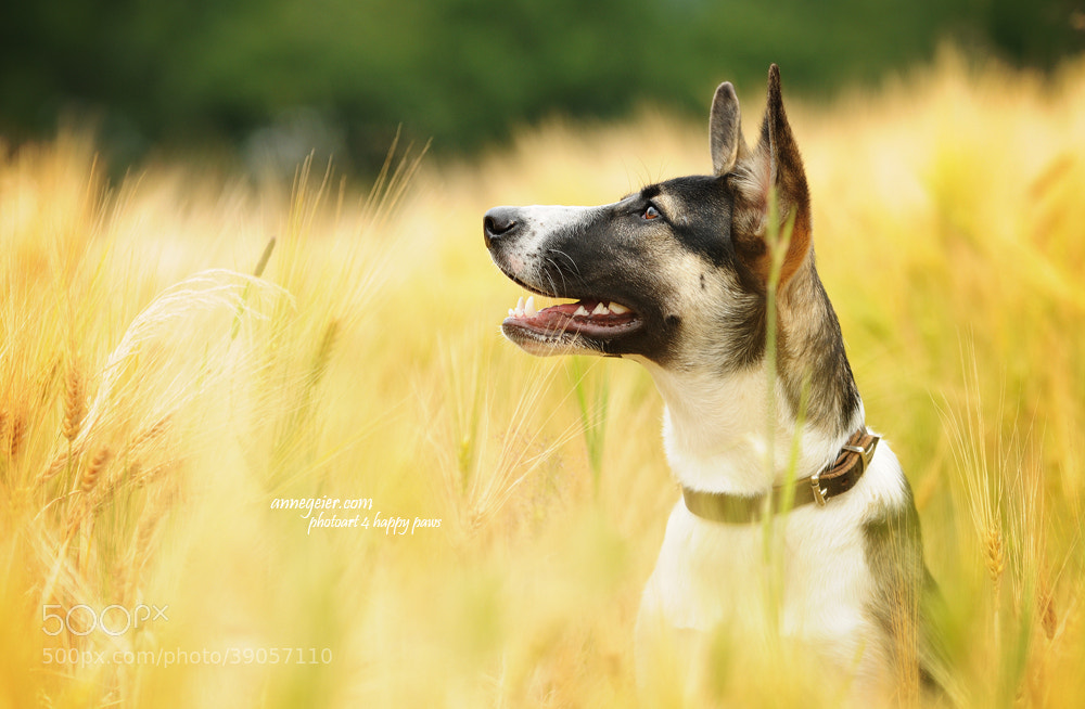 Photograph What a beauty - a former street dog by Anne Geier on 500px