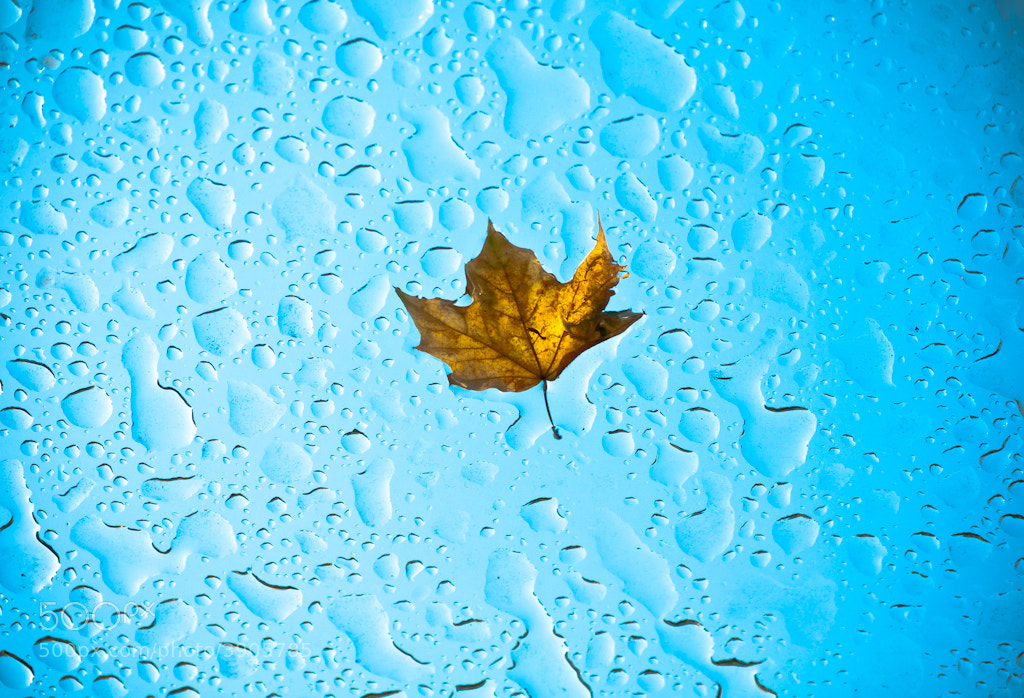 Photograph Leaf on Glass Bustop Roof by Orlin Bertsch on 500px