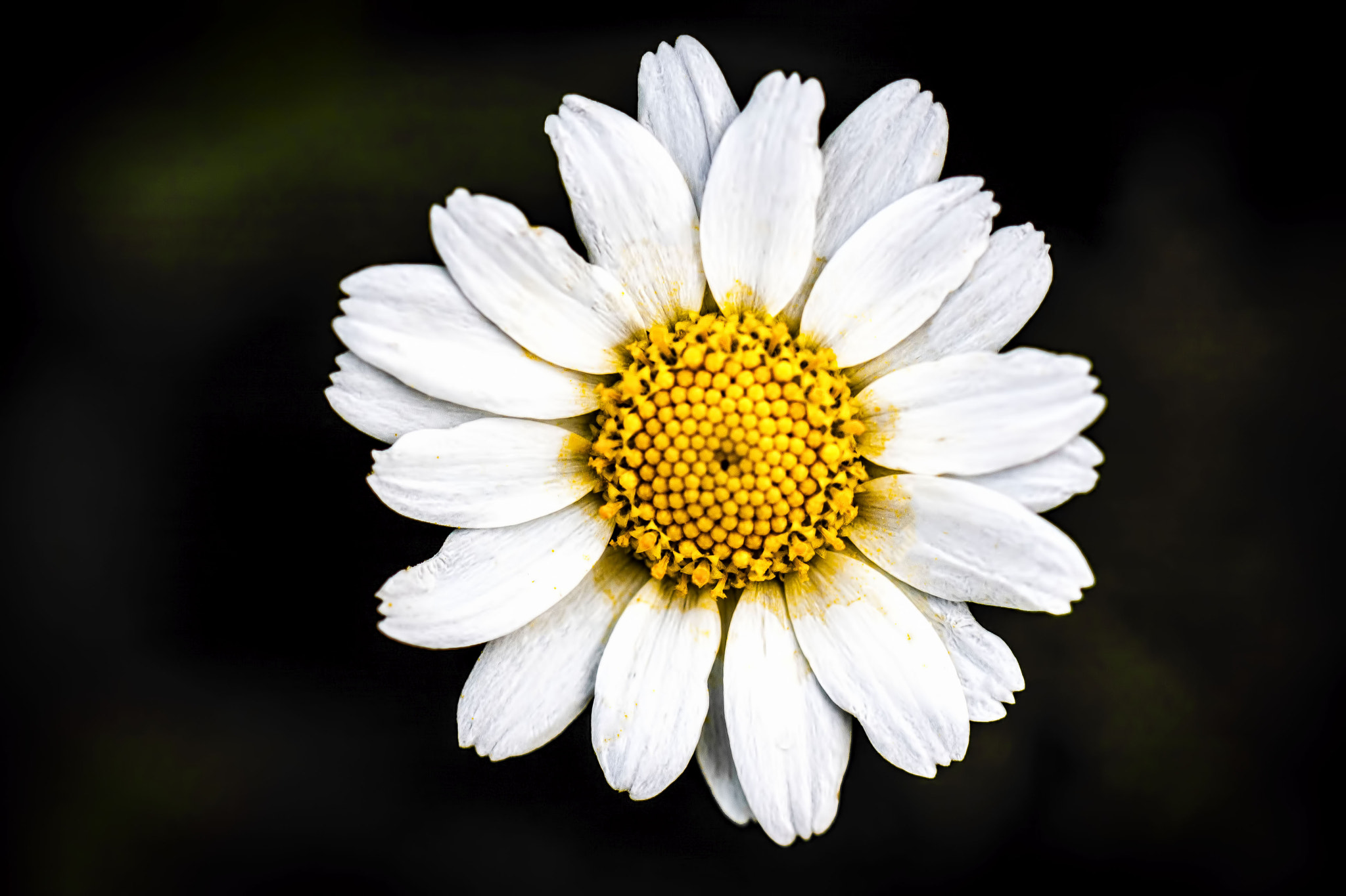 Photograph Chamomile by Yannis Karantonis on 500px