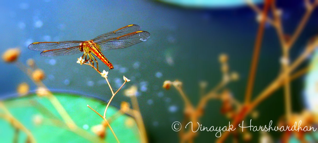 Photograph the misty fly by Vinayak The wink of shutter on 500px