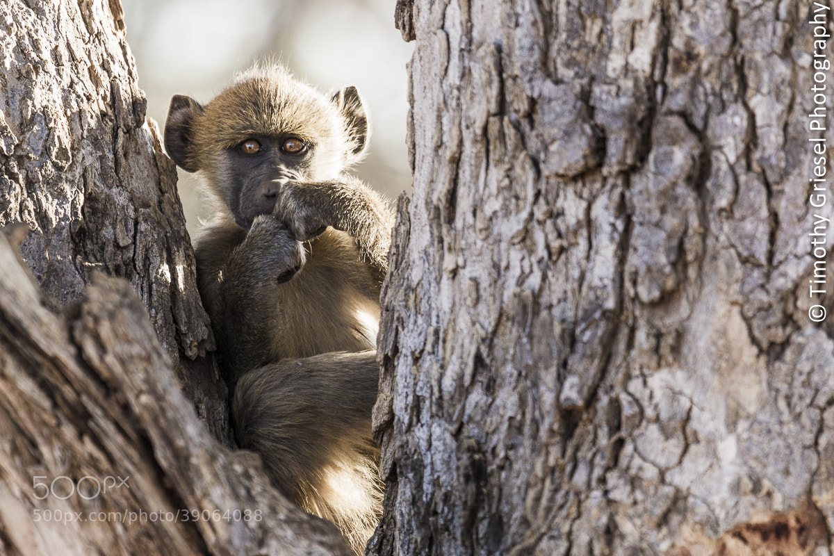 Photograph Botswana Baby by Timothy Griesel on 500px