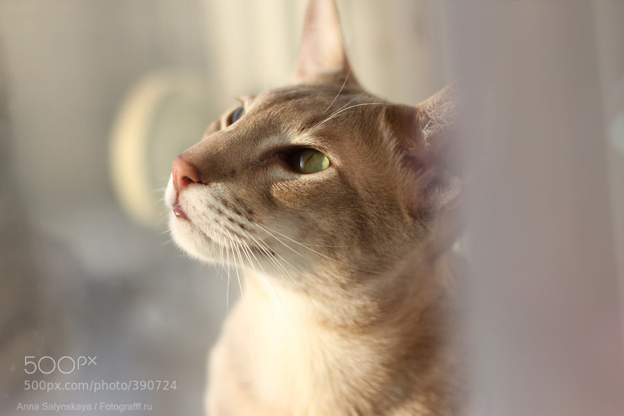 Photograph Котэ by Anna Salynskaya on 500px