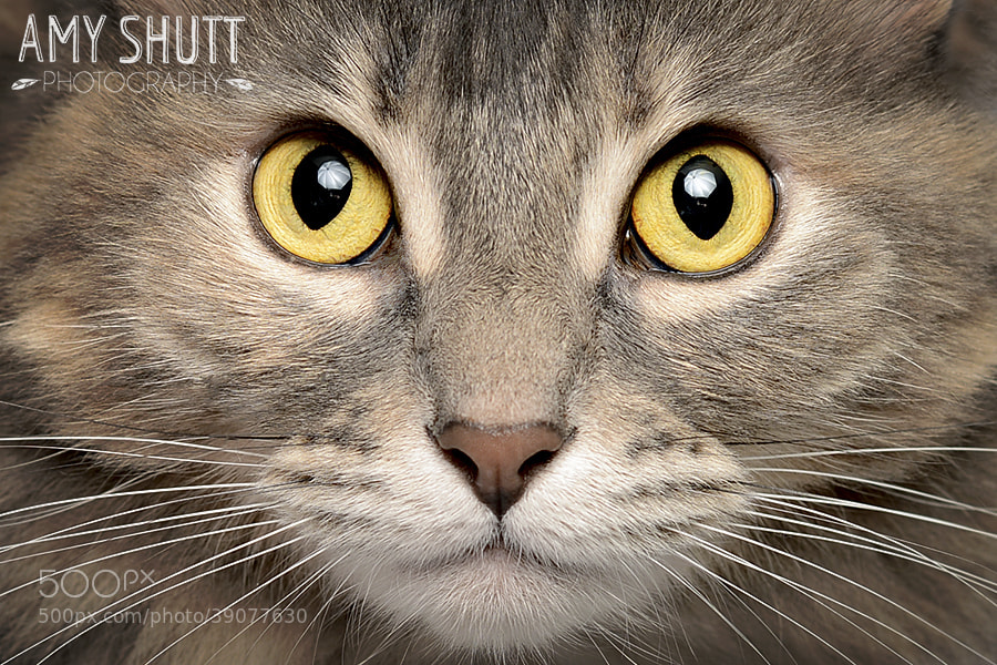 Photograph Portrait of Gray by Amy Shutt on 500px