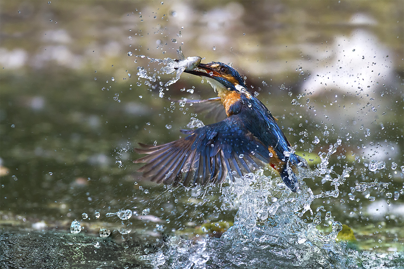 Photograph Catch! by Marco Redaelli on 500px
