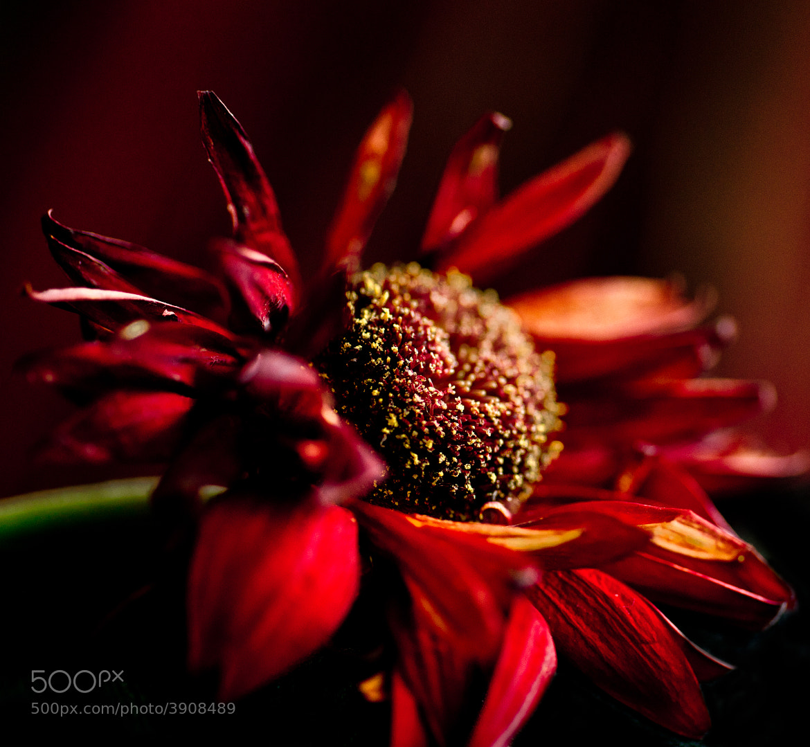 Photograph Dying Wish by Dean Mullin on 500px