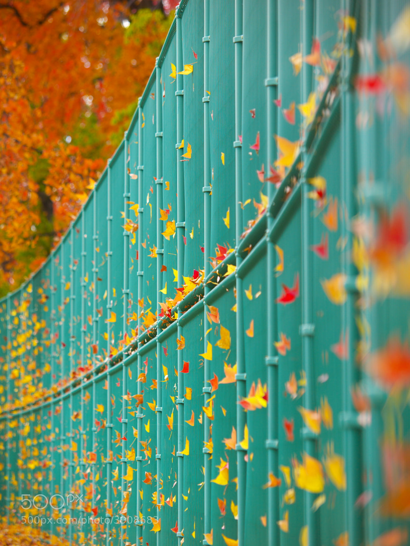 Photograph Art of Wind by Kaz Watanabe on 500px