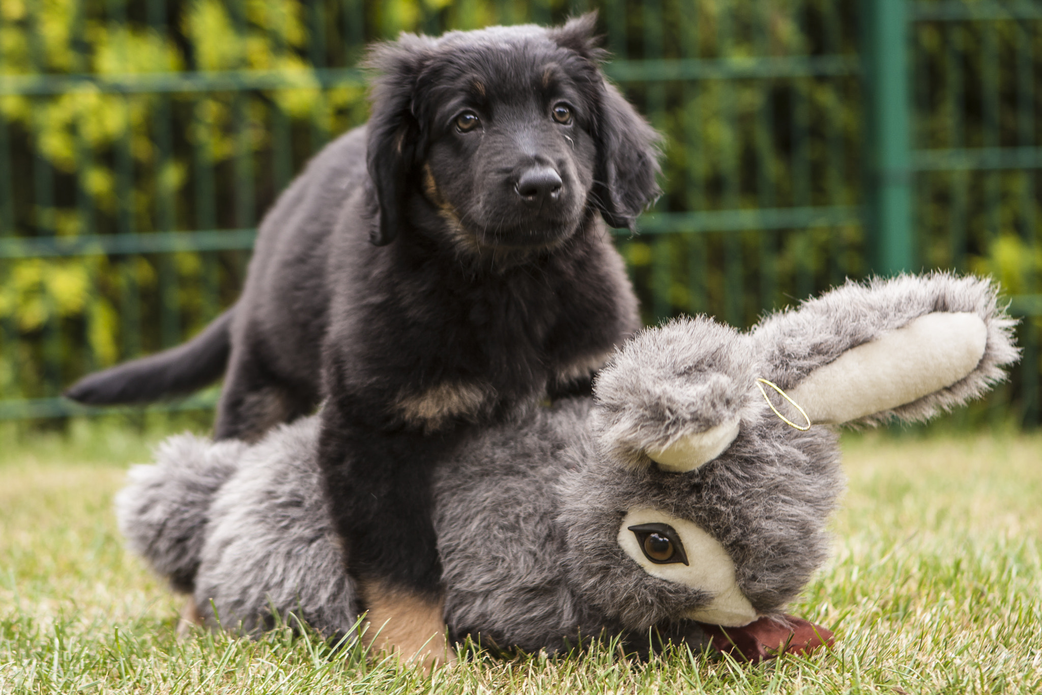 Photograph Indi and his rabbit by Holger  on 500px