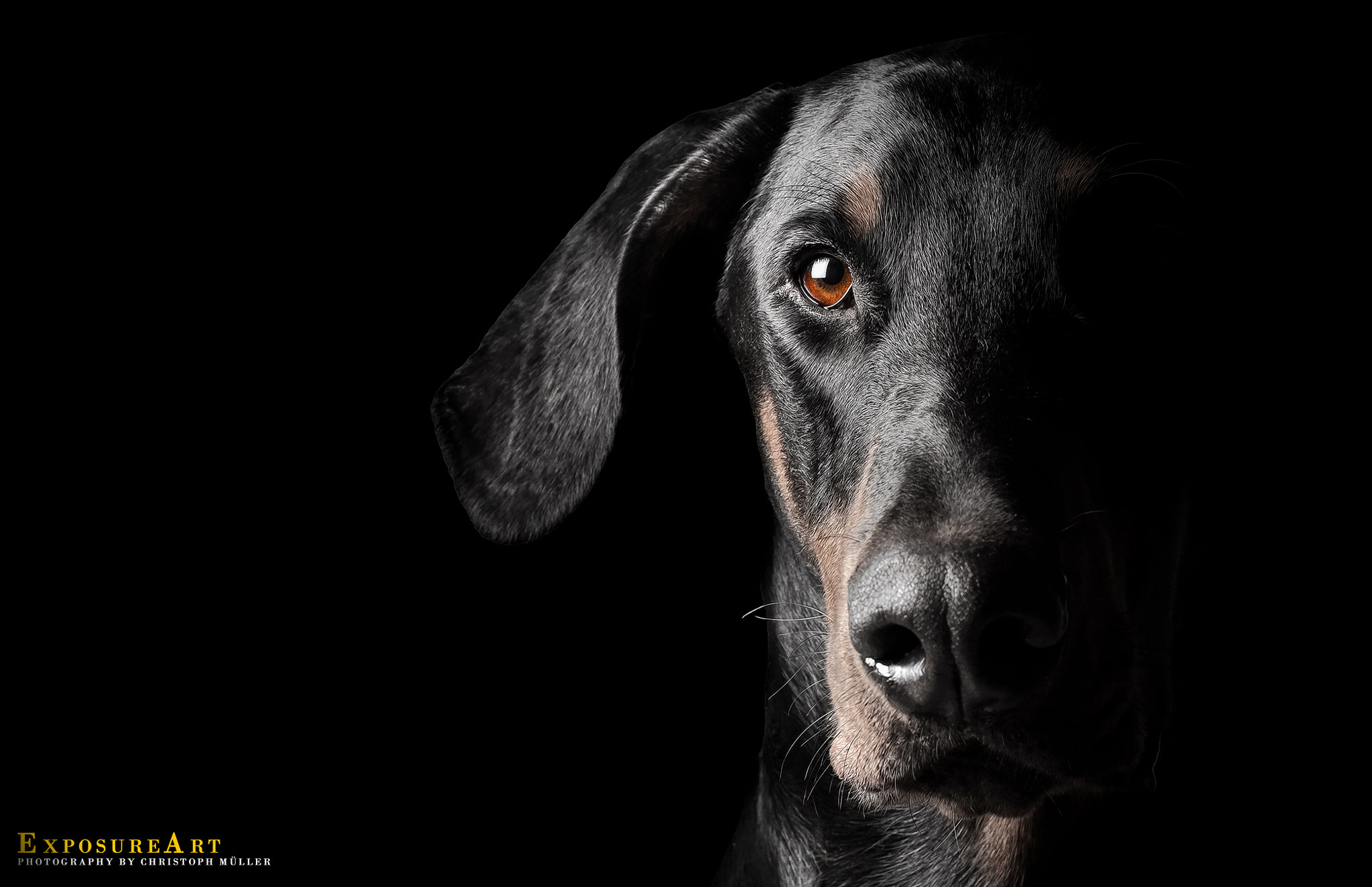 Photograph TheDoberman by Christoph Müller on 500px