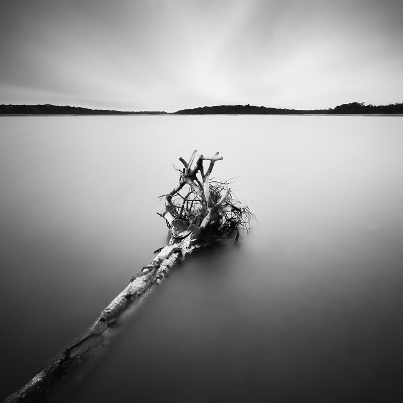 Photograph Roots by Jeff Vyse on 500px