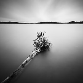 Roots by Jeff Vyse (jeffvyse)) on 500px.com