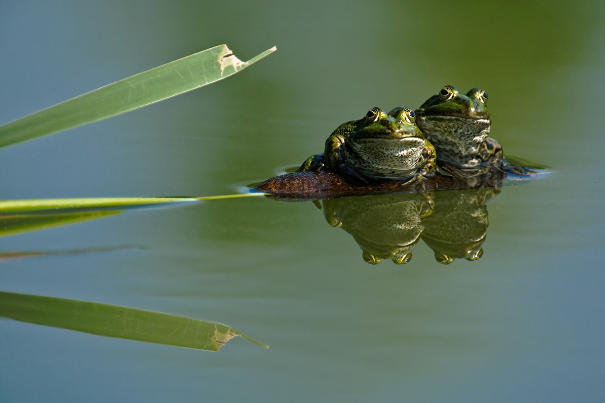 Photograph Buddies by xflo : w on 500px