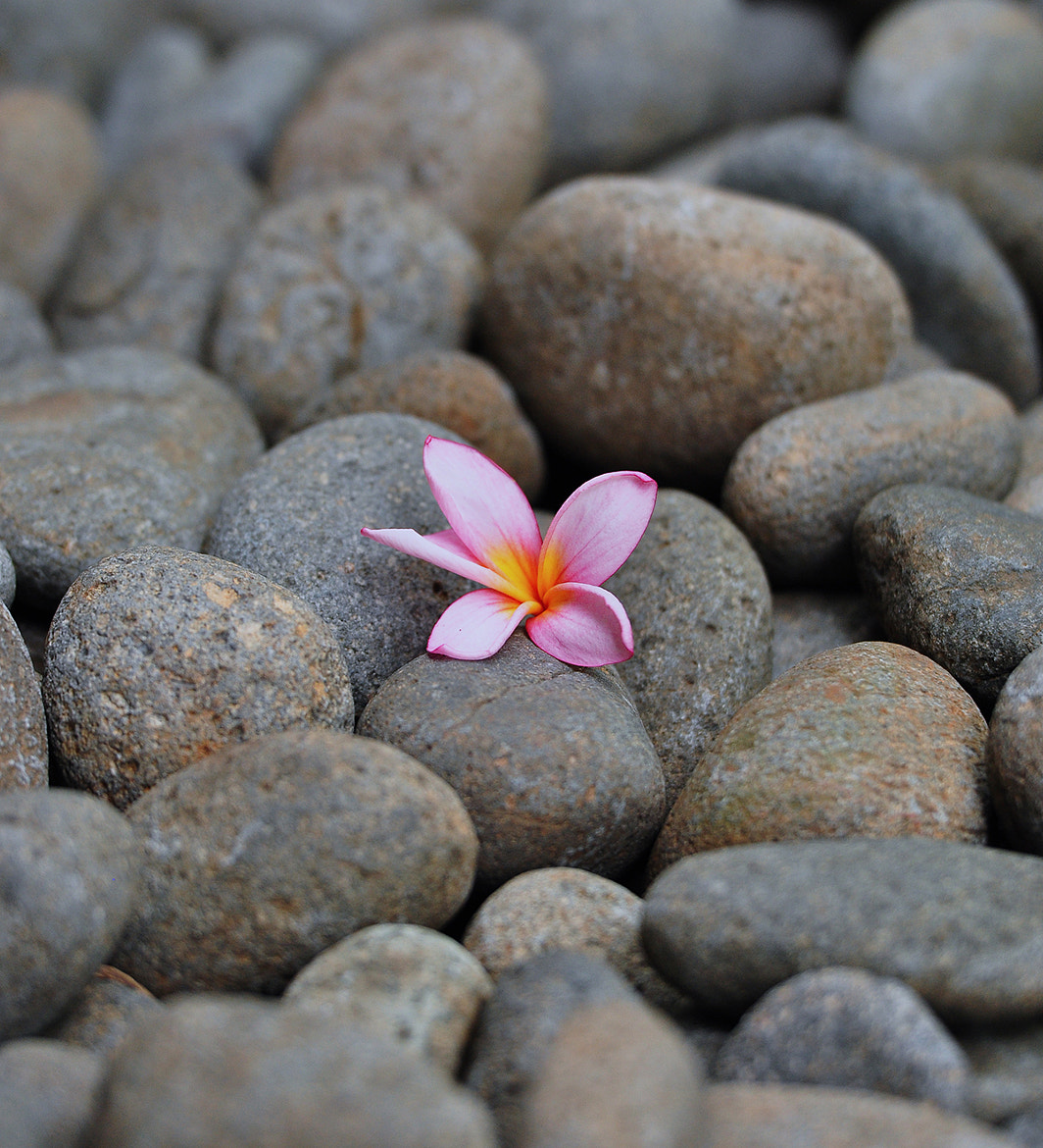 Photograph Stone Flowers by Wawan Setiawan on 500px