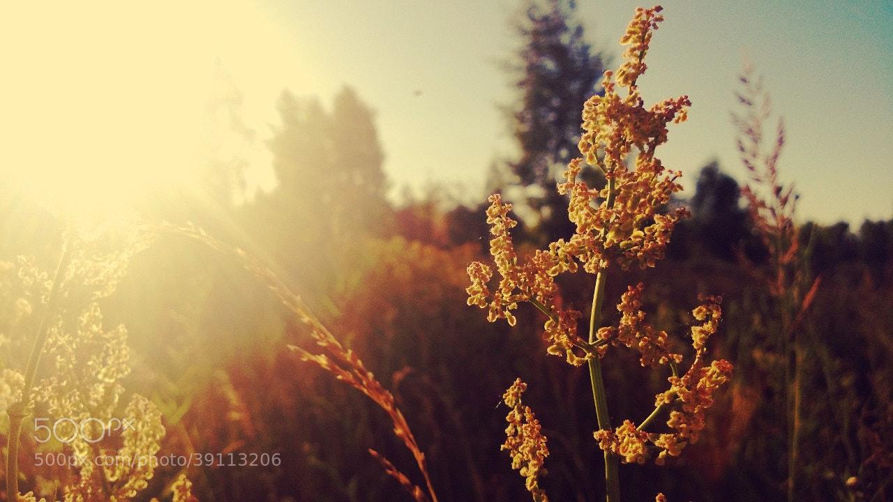Photograph Untitled by Nijaz Turdaliev on 500px