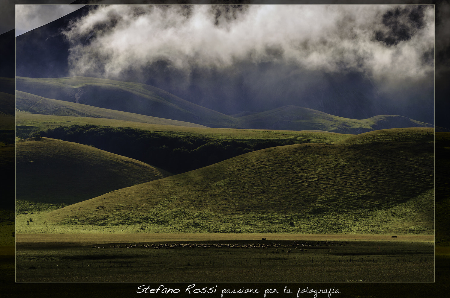 Photograph Sheep to the pasture by Stefano Rossi on 500px