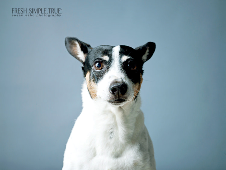 In the five years I've lived with Jack, and in the dozens and dozens of shoots he's helped me with, I've never seen this expression. I have no idea what it means :)
