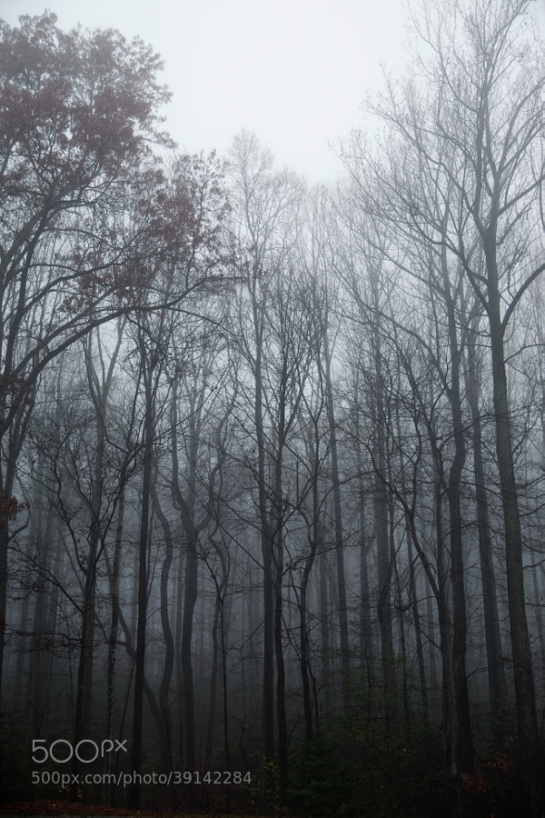 Fog Forest by Joshua Davis Photography