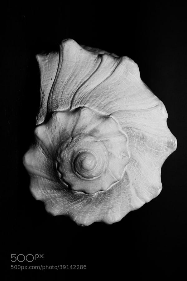 Conch by Joshua Davis Photography