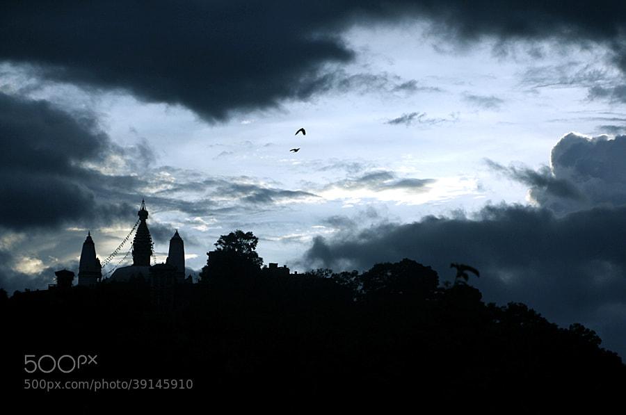Photograph Peaceful flight by Nisha Shakya on 500px