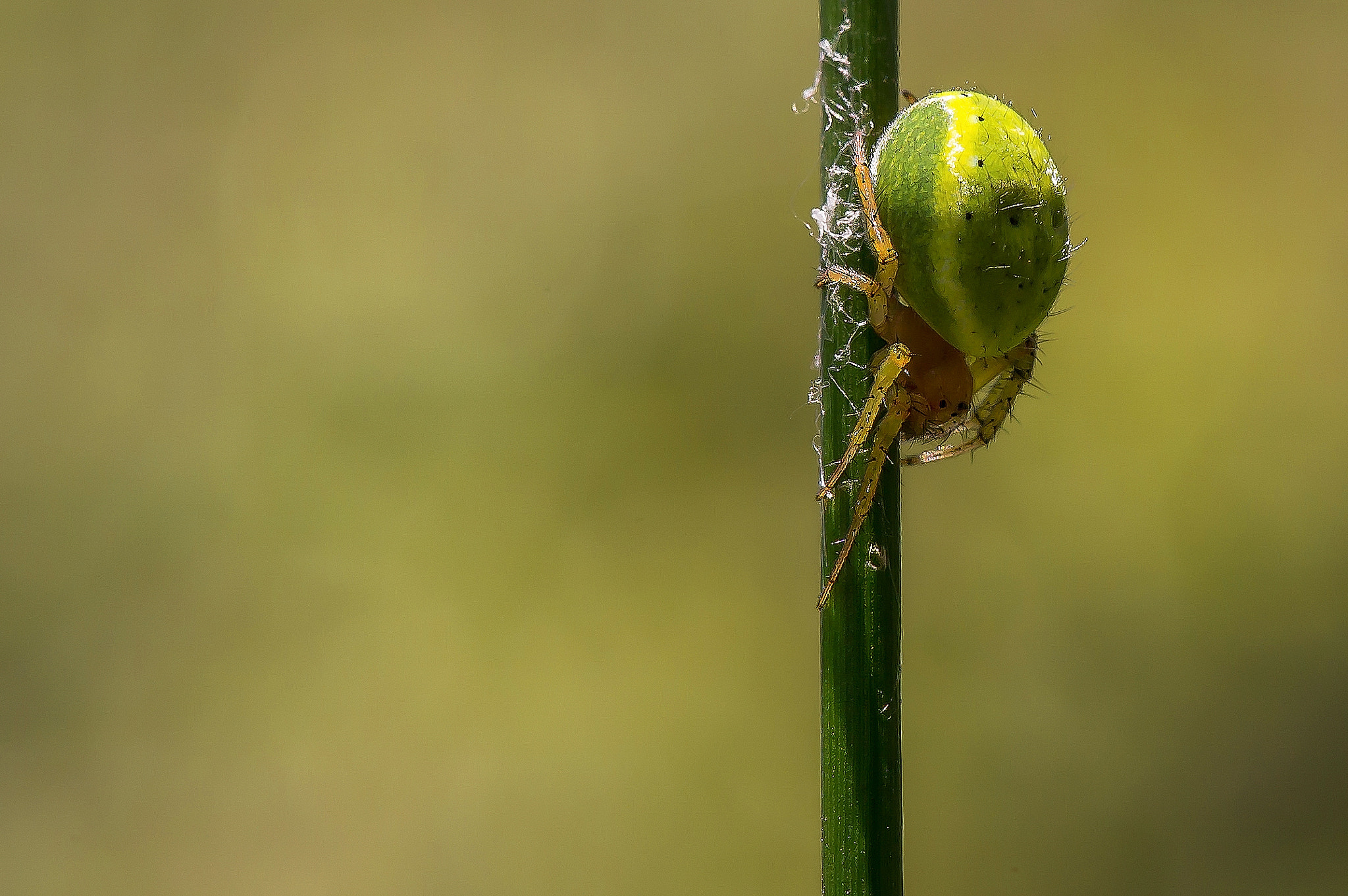 Photograph spider by Gabriele Mucci on 500px