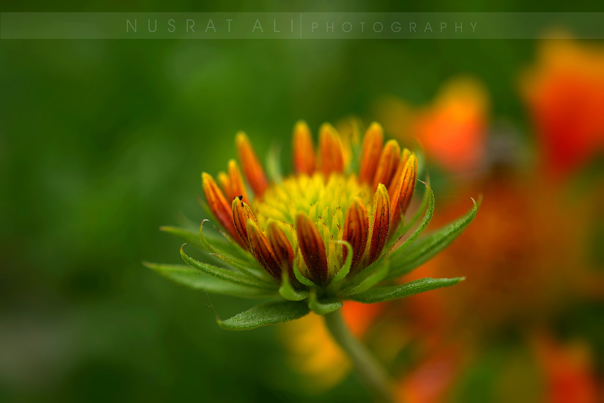 Photograph Flower of Hope.. by Nusrat Ali on 500px
